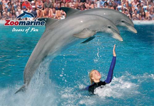 delfines saltando en piscina de Zoomarine