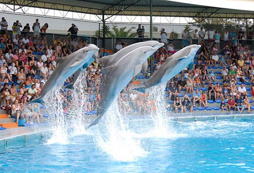 Zoomarine dolphins jumping on show