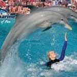 The Zoomarine dolphin show