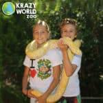 Krazy World 6