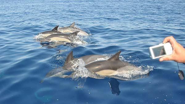 Observação Golfinhos no seu habitat em Albufeira