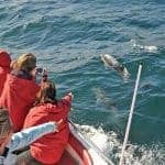 Group photographing dolphins near Albufeira