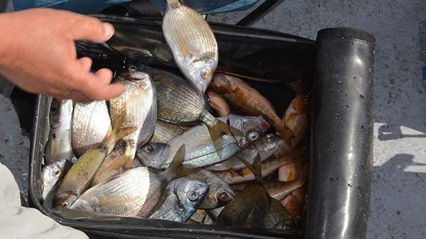 Bucket of Fish caught on Reef Fishing Albufeira thebookongonefishing