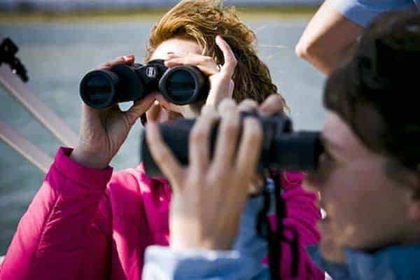 People Birdwatching in Ria Formosa