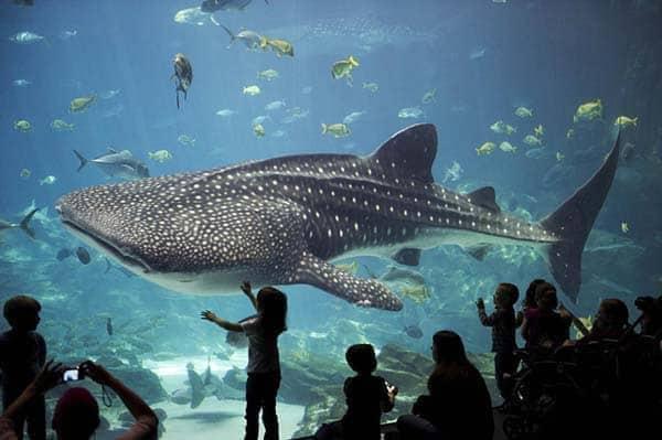 Baleia no Aquário de Sevilha