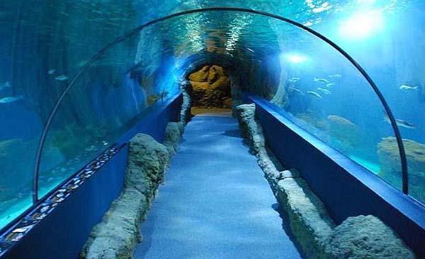 en el túnel bajo el acuario - Sevilla