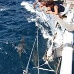 Group looking at the dolphins from Sailing Boat, Lagos