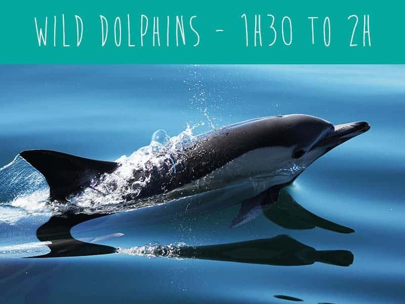 wild dolphins tour, Ferragudo