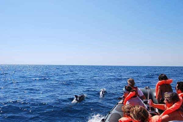 pasajeros en semirrígida observando delfines al lado de la lancha