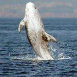 whale diving near Lagos