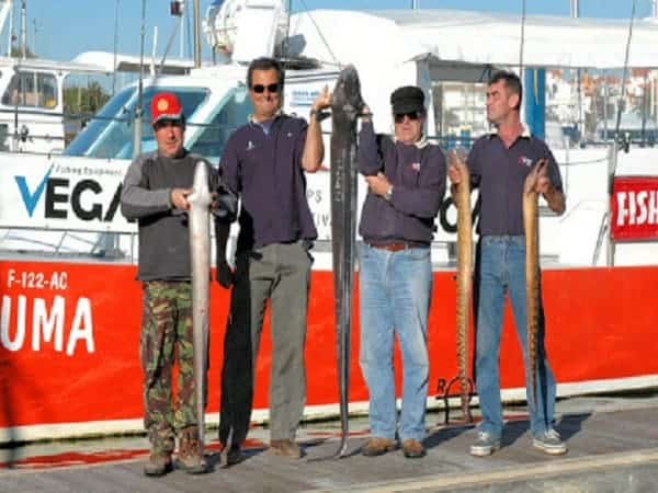 Holding fishs from reef fishing - Vilamoura