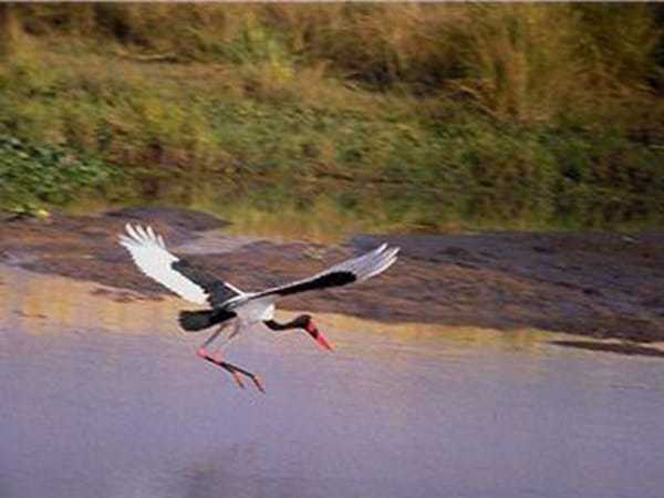 ave volando cerca del agua en Ria Formosa