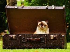 A cat in a suit case