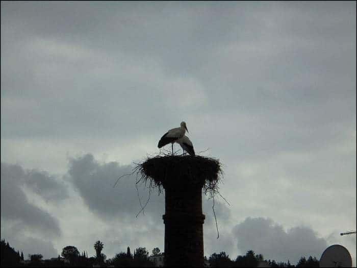 nido de cigüeñas con dos adultos sobre una chimenea de una fábrica