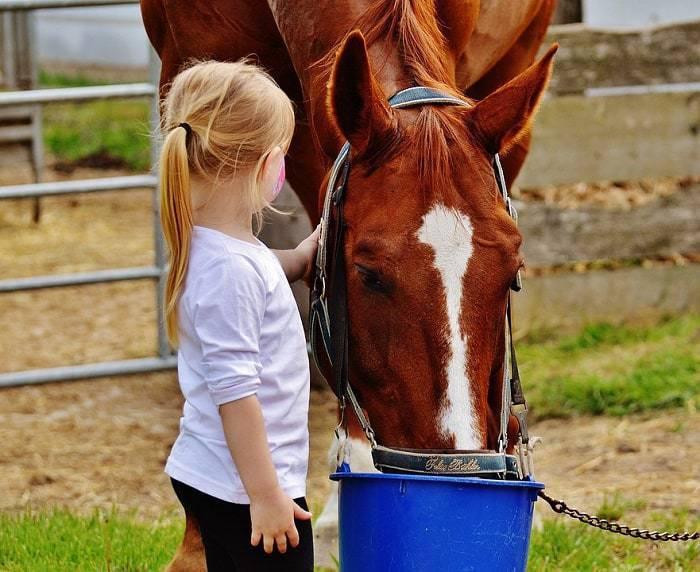 Une petite fillenourrissant un cheval