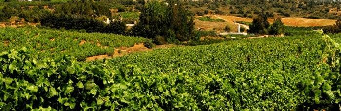 Vignoble Quinta dos Vales