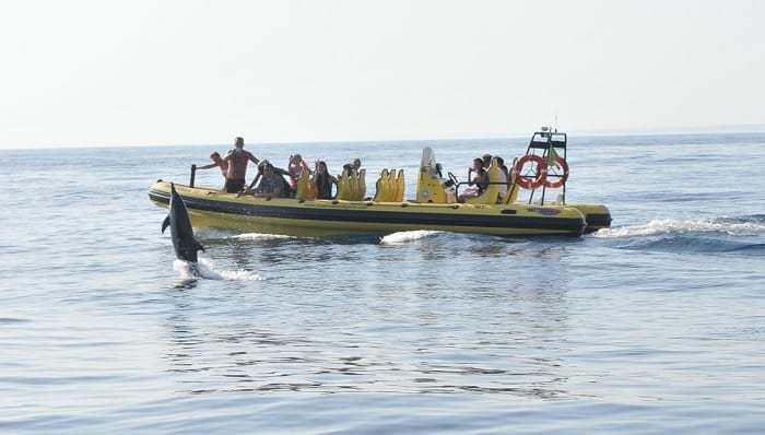 pasajeros viendo delfines desde lancha semirrígida
