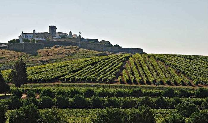 Vineyard in Estremoz