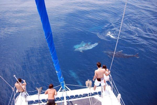 des dauphins autour d'un catamaran en Algarve