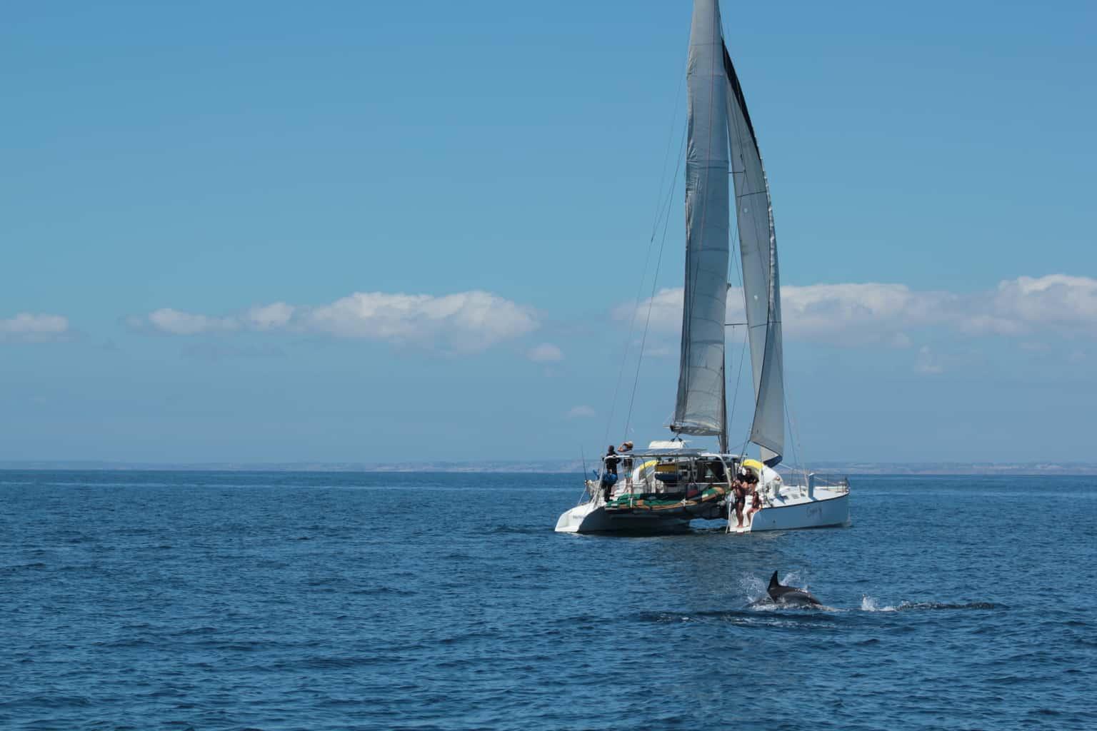 oceanus catamaran with dolphins