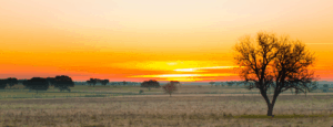 sunset in alentejo fields