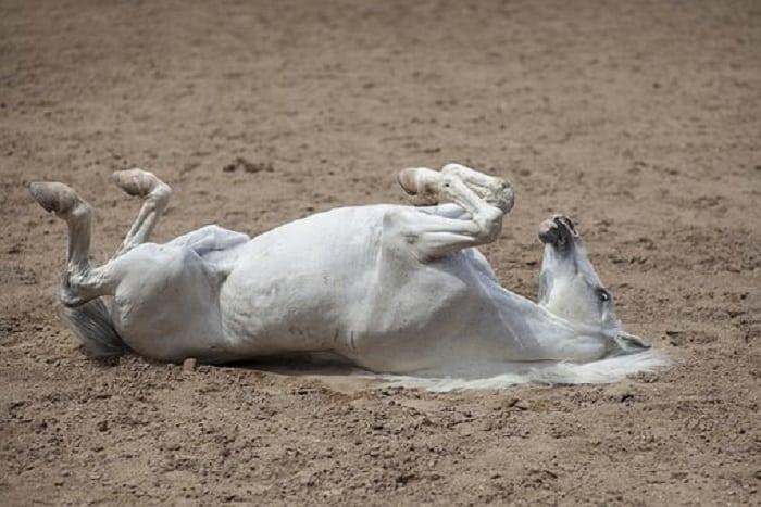 Horse 2359707 340