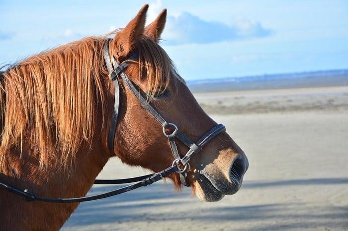 Horse 2941137 960 720