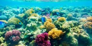 Fond marin de l'ile Marietas