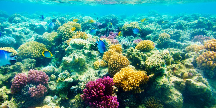 Marietas Island Snorkeling