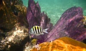 Récif de l'Algarve