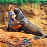 Zoomarine sea lion kissing a women