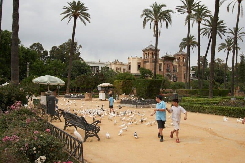 niños y palomas en el parque de María Luisa de Sevilla