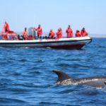 Dolphin tour alvor RIB