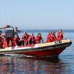 Rib Boat Dolphins
