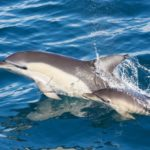 Dolphins Alvor Boat Trip