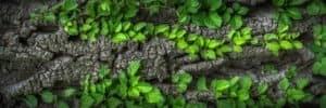 pedazo de madera con hojas verdes brotando